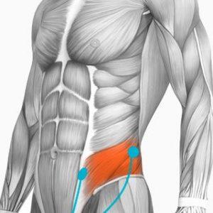 Electrotens electroestimuladores colocación de los electrodos según los músculos del cuerpo